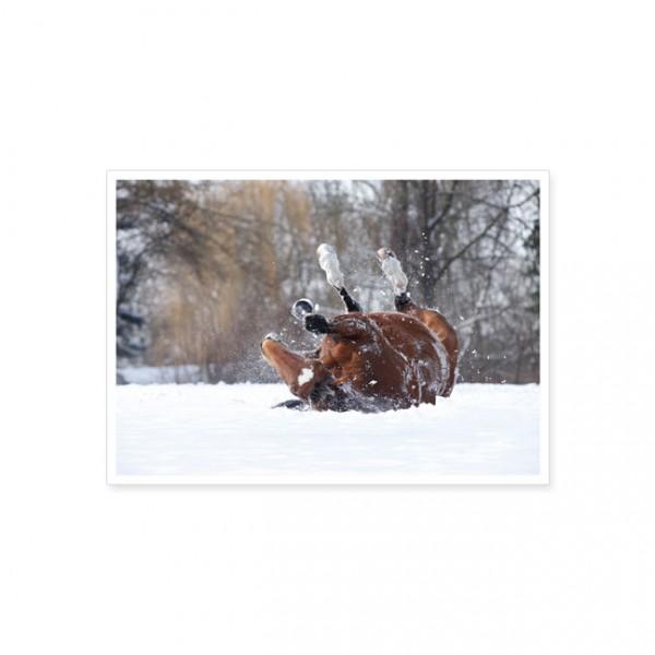 """Postkarte """"Pferde Winter-Wellness"""""""