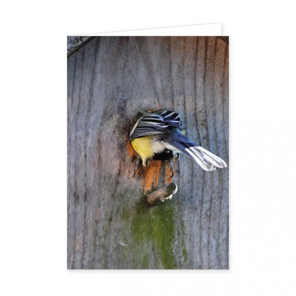 """Doppelkarte """"Vogelhaus-Einzug"""""""