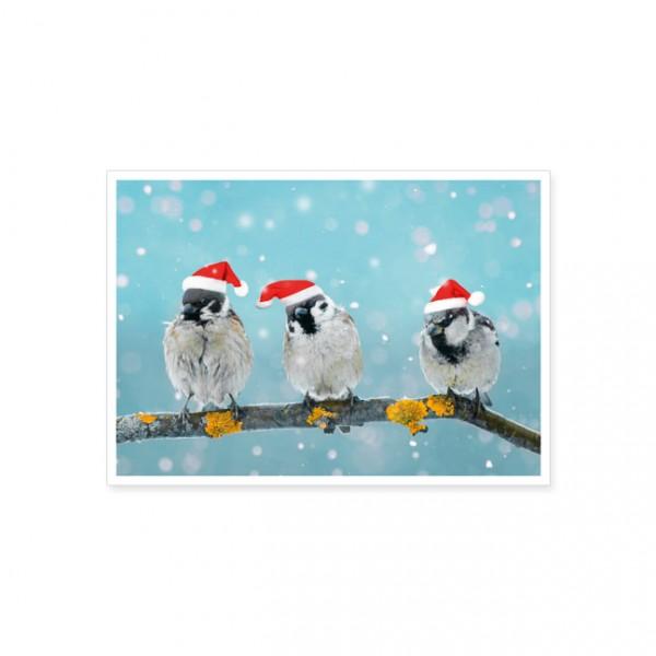 """Postkarte X-Mas """"Drei Spatzen mit Weihnachtsmützen"""""""