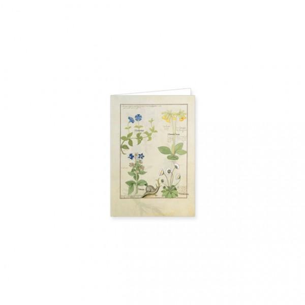 """Mini-Doppelkarten Gold """"Blaue Clematis oder Hahnenfuß und Primula"""""""