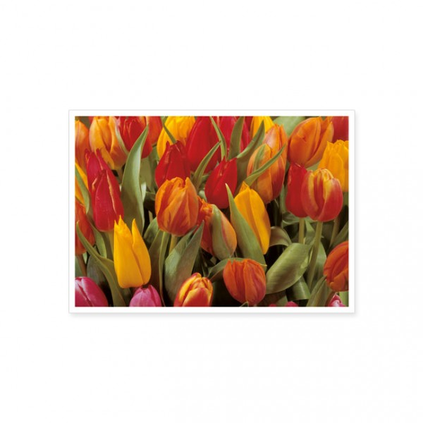 """Postkarte """"Bunte Tulpen"""""""