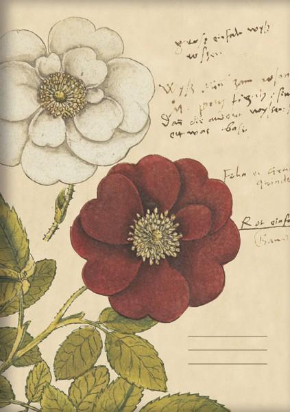 Kladde A5 'Rosen aus Conrad Gesner Historia Plantarum'