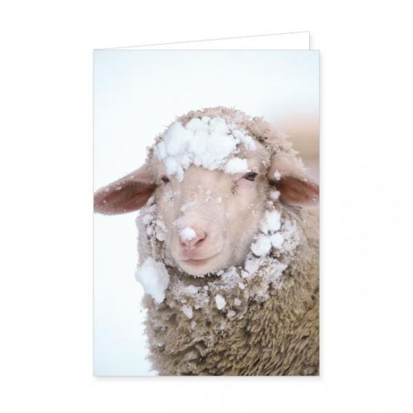 """Doppelkarten """"Schaf mit Schneemütze"""""""