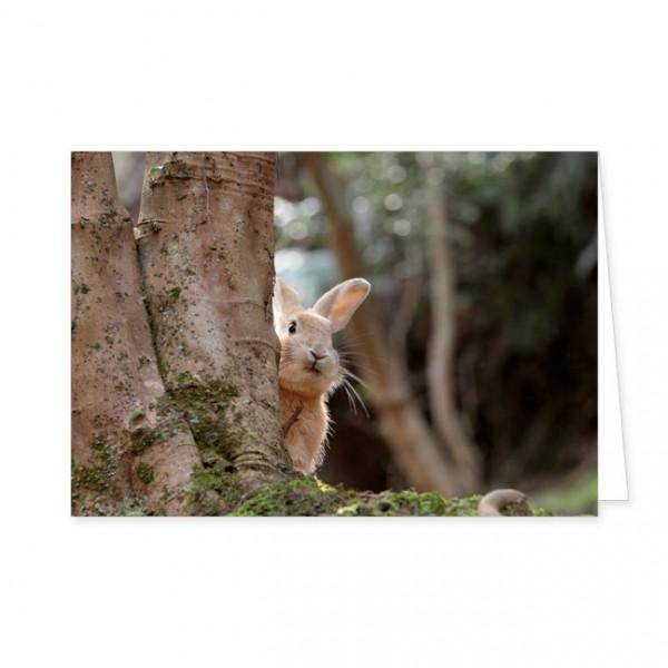 """Doppelkarten """"Wildkaninchen hinterm Baum"""""""