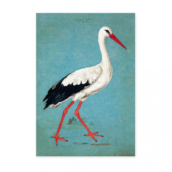 """Postkarten Large """" Weißstorch """""""