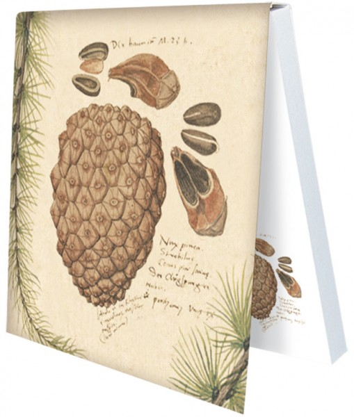 Klebezettel 'Gesner Zapfen' aus Conrad Gesner Historia Plantarum