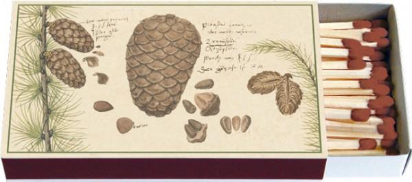 Zündholz-Schachtel 'Zapfen' aus Conrad Gesner Historia Plantarum