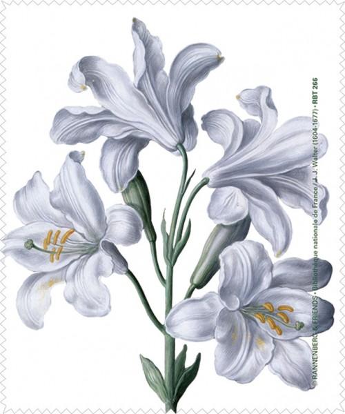 Brillenputztuch 'Lilie aus dem Nassau Florilegium'