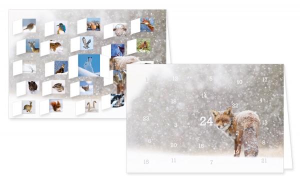 """""""Tiere im Schnee"""""""