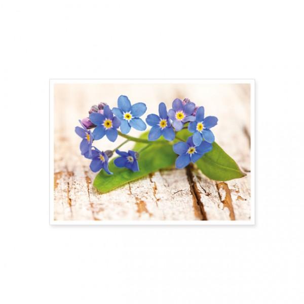 """Postkarte """"Vergissmeinnicht-Blüten auf Holz"""""""