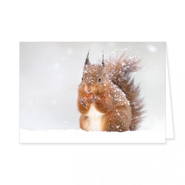 """Doppelkarte """"Eichhörnchen im Winter"""""""