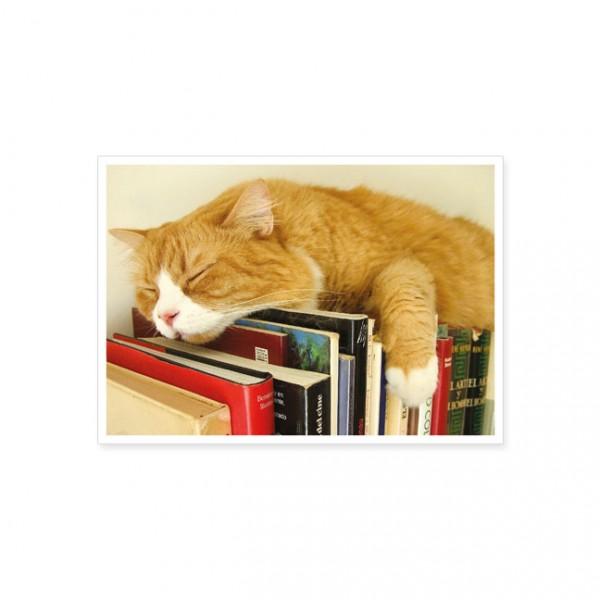 """Postkarte """"Schlafende Katze auf Büchern"""""""