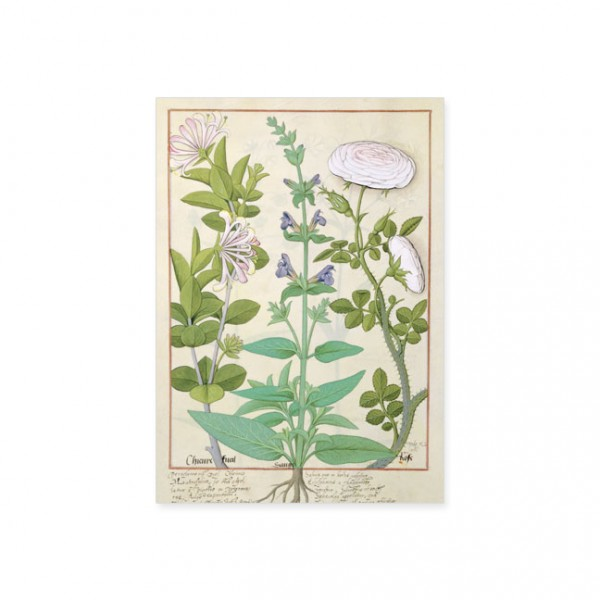 """Postkarte Gold """"Das Buch der Einfachen Heilmittel Folie 132"""""""