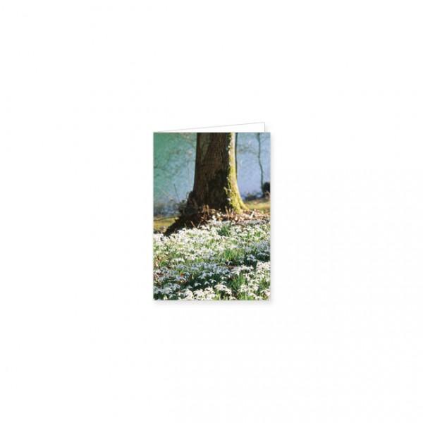 """Mini-Doppelkarte """"Waldboden voller Schneeglöckchen"""""""