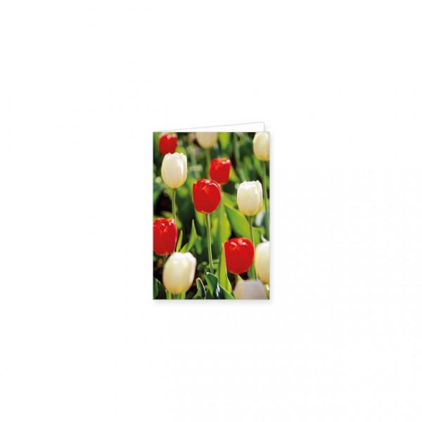 """Mini-Doppelkarte """"Rote und weiße Tulpen"""""""