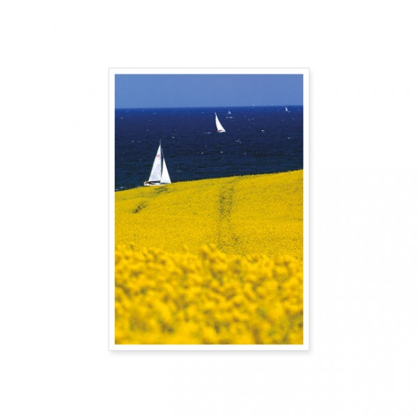 "Postkarte ""Steife Brise mit Rapsfeld"""