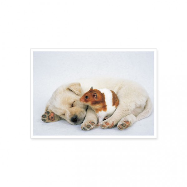 "Postkarte ""Welpe und Hamster"""