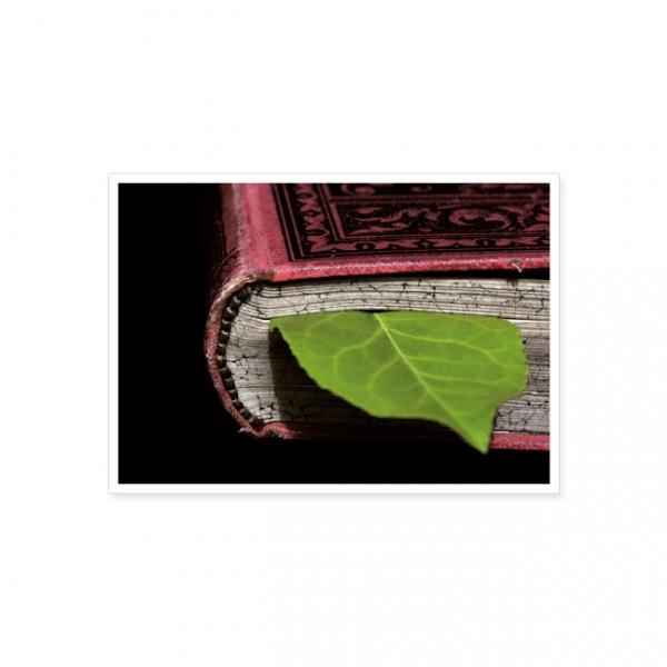 "Postkarte ""Blatt im Buch"""