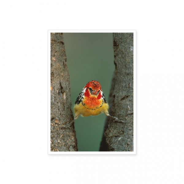 """Postkarte """"Spagatvogel"""""""