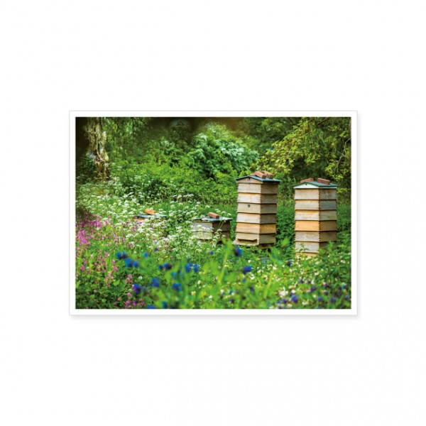 """Postkarte """"Bienenstock auf der Wiese"""""""