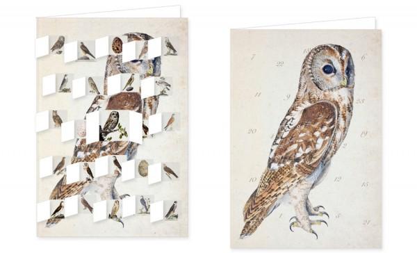 Adventskalenderdoppelkarte 'Greifvögel'