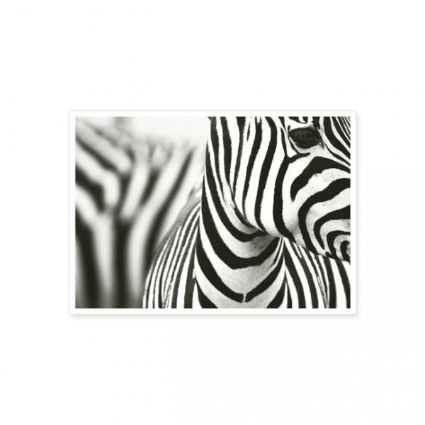"""Postkarte """"Zebra"""""""