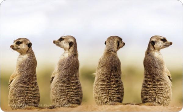 """Brettchen """"Erdmännchen Quartett"""""""