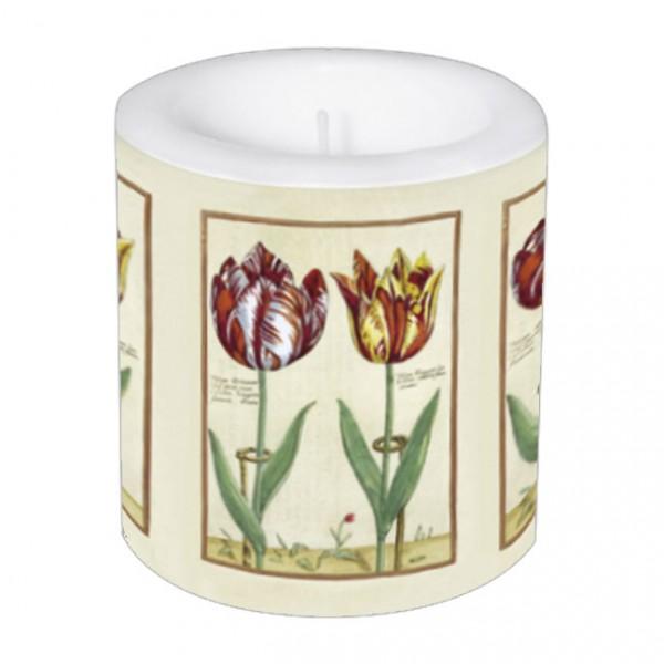 Lampionkerze 'Tulipa Octaviani und Tulipa Elegant'