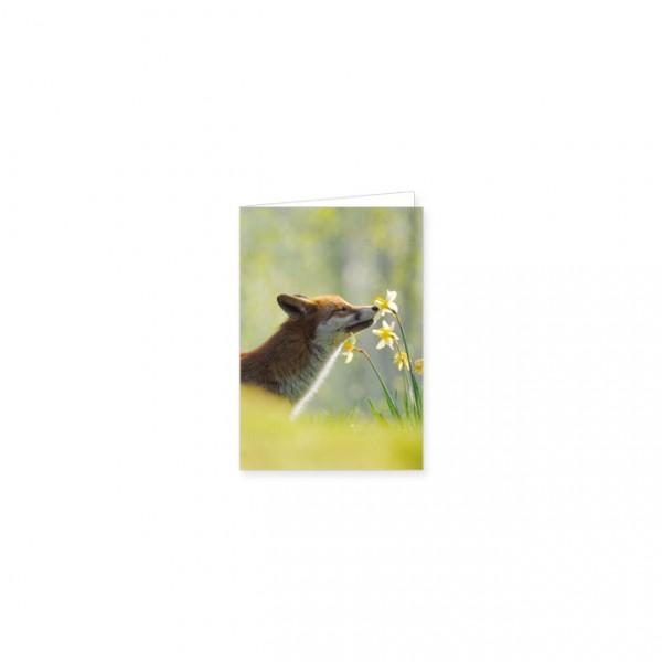 "Mini-Doppelkarte ""Junge Kaninchen im Gras"""