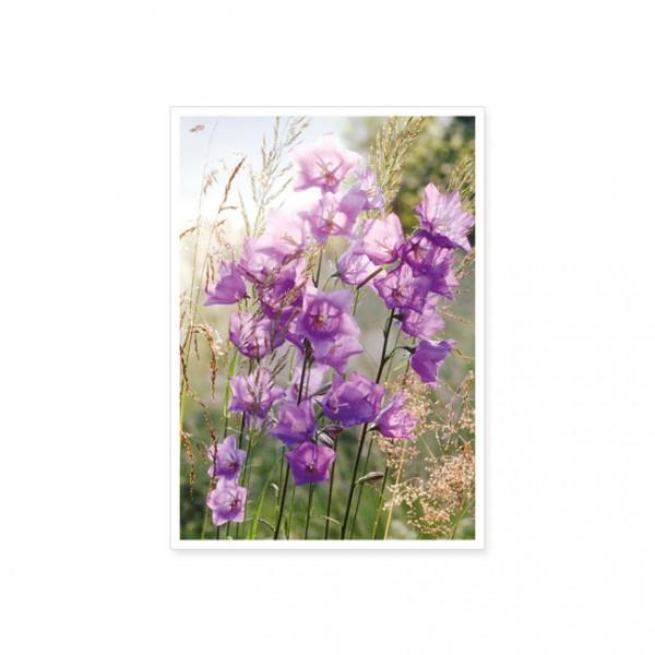 "Postkarte ""Glockenblumen"""