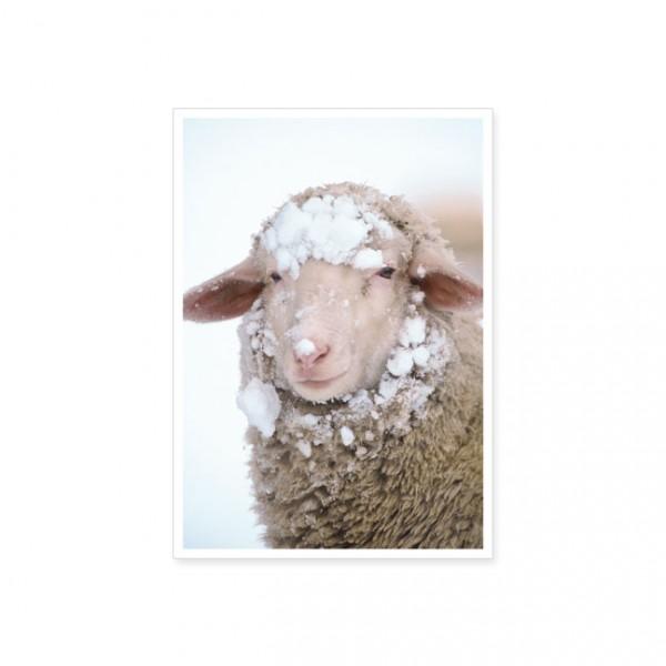"""Postkarte """"Schaf mit Schneemütze"""""""