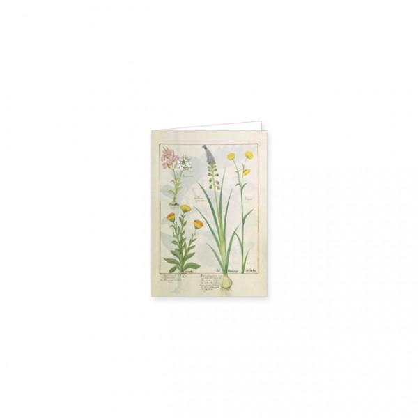 """Mini-Doppelkarten Gold """"Das Buch der Einfachen Heilmittel Folie 118r"""""""