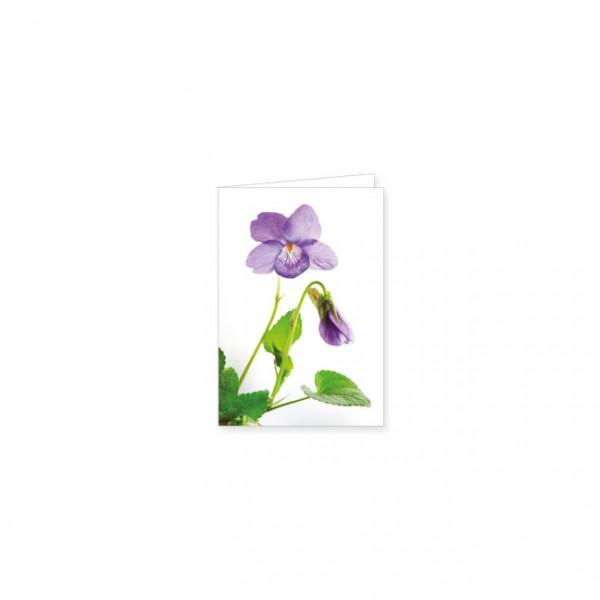 """Mini-Doppelkarte """"Hain-Veilchen"""""""