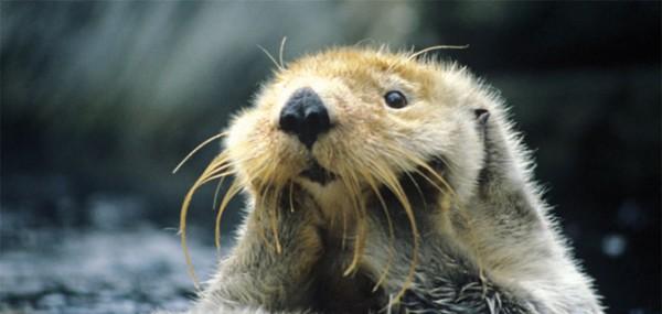 """XXL-Postkarte """"Otter"""""""