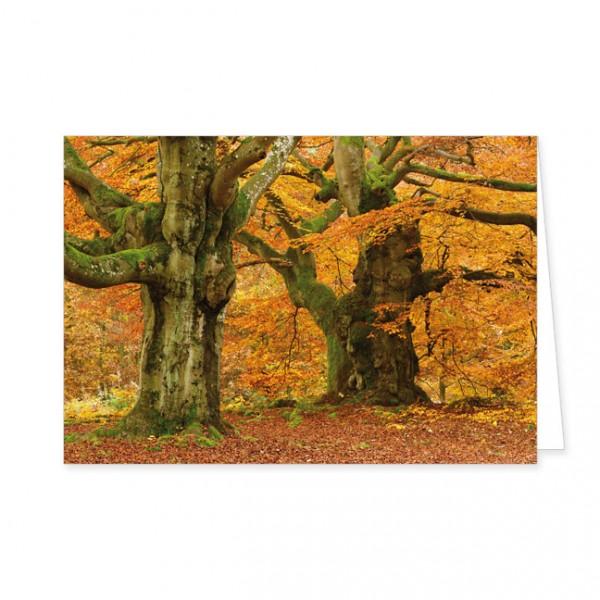 """Doppelkarte """"Hutebuchen im Herbst"""""""