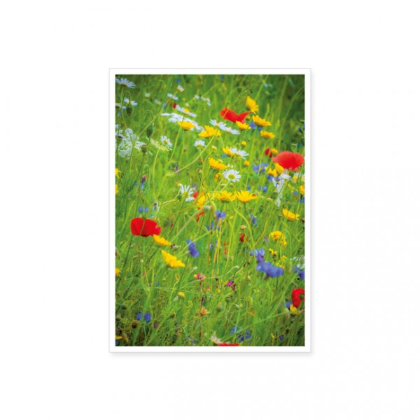 "Postkarte ""Wildblumen"""