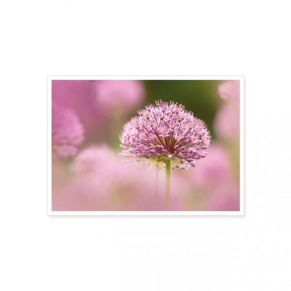 "Postkarte ""Lila-violettes Zierlauch"""