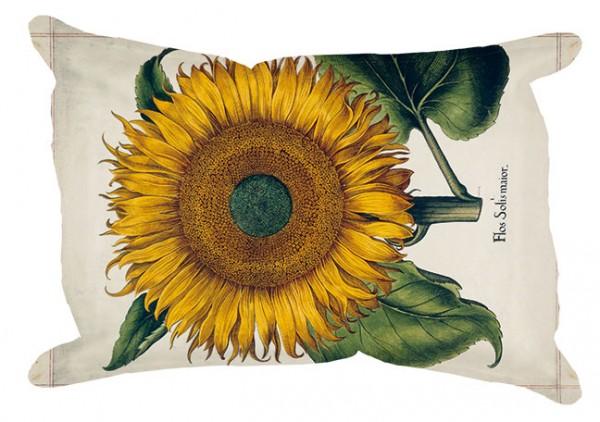 Wisch 'Sonnenblume aus dem Garten von Eichstätt'
