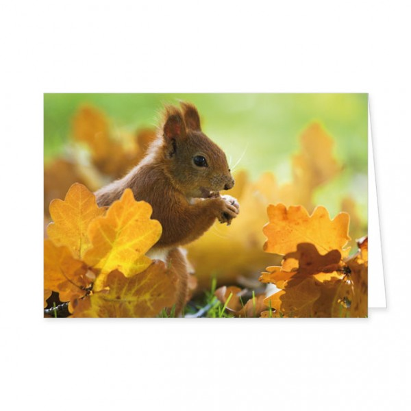 """Doppelkarte """"Eichhörnchen im Herbstlaub"""""""