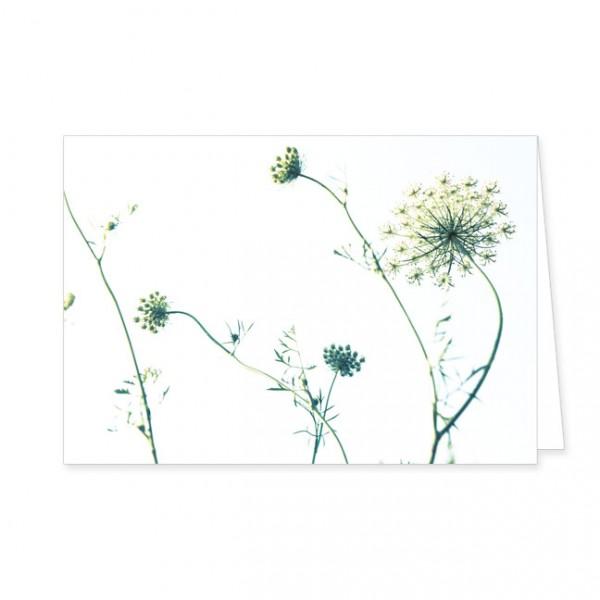 "Doppelkarte""Wilde Möhre"""