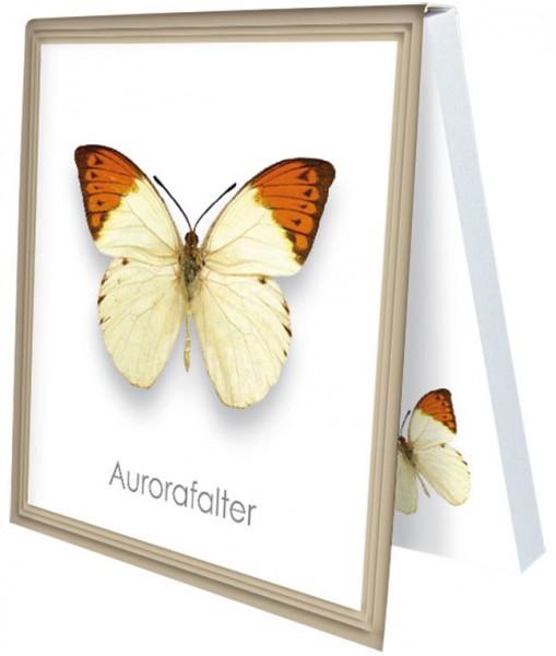 Klebezettel 'Aurorafalter'
