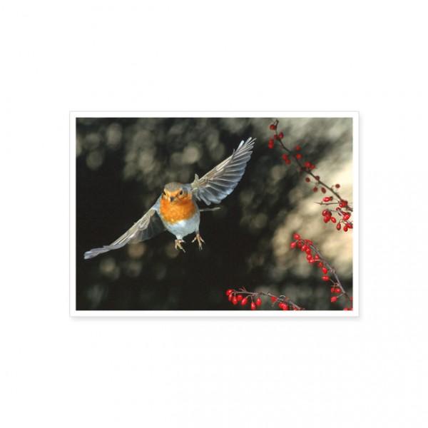 """Postkarte """"Rotkehlchen im Anflug"""""""