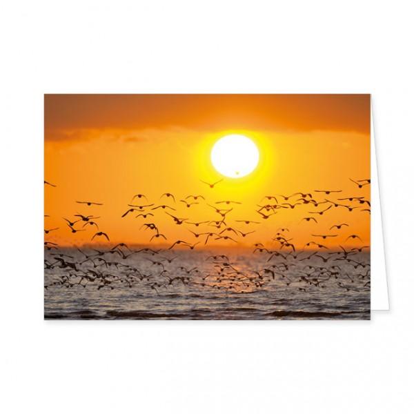 """Doppelkarten """"Austernfischer beim Sonnenuntergang"""""""