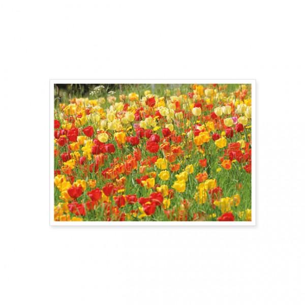 """Postkarte """"Rotgelbes Tulpenfeld"""""""