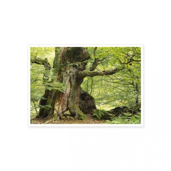 """Postkarte """"Knorriger Baumstamm im Frühlingsgrün"""""""