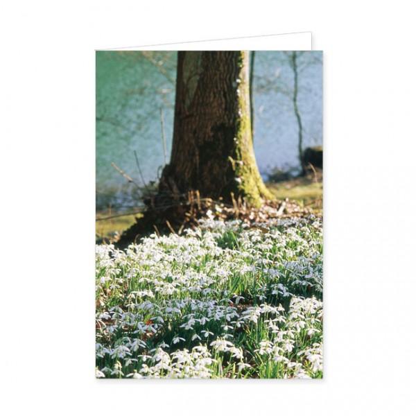"""Doppelkarte """"Waldboden voller Schneeglöckchen"""""""