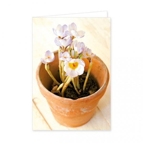"""Doppelkarte """"Krokus im Blumentopf"""""""