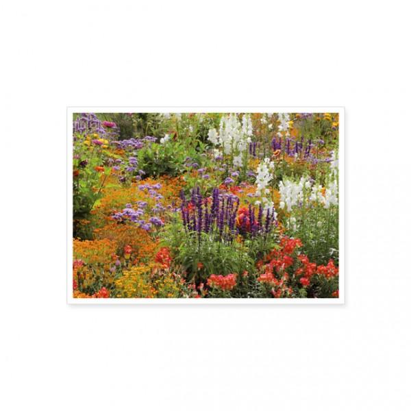 "Postkarte ""Wilder Sommergarten"""