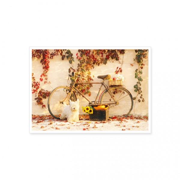 postkarte hund mit fahrrad postkarte saison herbst karten rannenberg friends. Black Bedroom Furniture Sets. Home Design Ideas