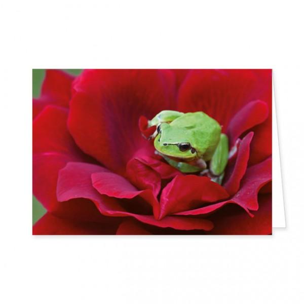 "Doppelkarte ""Laubfrosch auf roter Rose"""